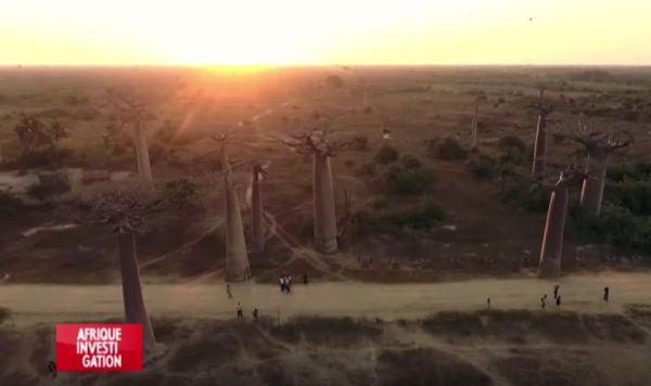 Madagascar : Les Combattants De La Grande Île