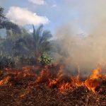 VANF Crime environnemental bêtise suicidaire aout 2020